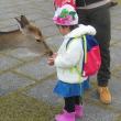 初冬の奈良公園