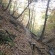 秀麗富嶽十二景の山へ 鶴峠から奈良倉山、鶴寝山へ