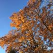 落葉樹・冬枯れの頃。