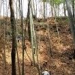 2018年3月18日 滝山城跡下草刈り 小宮曲輪の堀「きれいさっぱり」