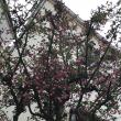 春とうつうつ