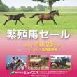 【ジェイエス・秋季繁殖馬セール2017】の「上場馬予定馬の概要と特徴」が発表!