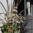 明日から、RIEKOさんのポストカードとカノーネの花のコラボ展始まります!!