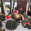 サボテンのメリークリスマス