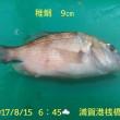 笑転爺の釣日記 8月15日☁☂ 浦賀港岸壁