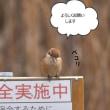 鳥。撮りまくり~(^^♪