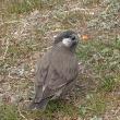 ムクドリ 公園で見る鳥。