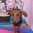 幼稚園体験にきてくれた【ルナちゃん】  犬のしつけ教室@アロハドギー