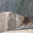 港湾の堤防護岸コンクリート