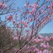 鎌ヶ岳(武平ルート)