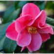 「自宅の庭に咲いた草花 」   (1の1)