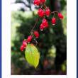 瑞々しい木の実