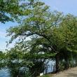 穏やかな初秋の上野公園です 其の5