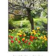 滞在型家庭菜園:ストックホルムの春