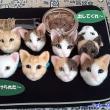 「MVNOのiPadにドコモメール設定」「羊毛フェルト猫顔」
