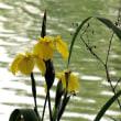 石神井公園で出会った花