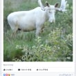 スウェーデンで白いヘラジカ撮影。