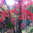 「紅葉狩り in 東郷公園」