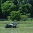 洪水が治まって田植え本番