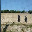 芝苗の植え付け