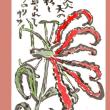 情熱の花、グロリオサ