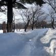 高田公園の雪景色と家の雪下ろし