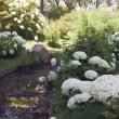 もう一度アジサイを撮りたくて‥服部緑地の都市緑化植物園へ 5