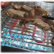 お肉が美味しくなるホンマに?「焼きグルメ」・・煙が出ない、柔らくてジューシー秘密の工夫が・・・