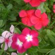 廻るもの 公園の花