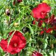 奥多摩にドライブし、夏の花々の写真を撮ってきました