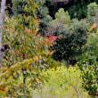 岐阜県美濃加茂市「ぎふ清流里山公園」の柿の葉などの紅葉と里山ふれあい牧場