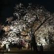 夜の新宿御苑