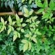 秋の植物たち(赤塚植物園 2018.10.14 撮影)