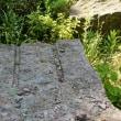 阿蘇溶結凝灰岩・馬門石(まかどいし)