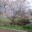 春分の日が過ぎて・・・