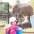 ゾウさんに会いたい!