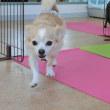 月曜日(10/19)の【ALOHA塾】は《チョークアートぷちレッスン》  犬のしつけ教室@アロハドギー