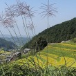 奈良県明日香村・細川棚田