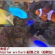 image2417 夏休みの熱帯魚