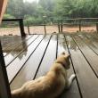 大変な雨です!