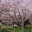道南桜巡り~二日目