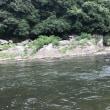 名張川でハスと戯れる