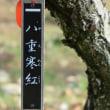 大倉山梅林の観梅会その1