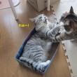 闘猫してんのかい。。