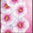 色鉛筆画372 (立葵)