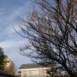 土曜の朝 薄く雲あり