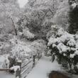 雪の中の墓参りとお寺さんへ
