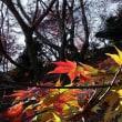 木漏れ日に映える永源寺の紅葉