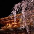 浅草寺~堂上げ~枝垂桜