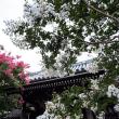 No.4340  サルスベリの花